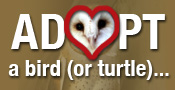 Adopt a Bird from Horizon WIngs