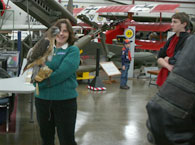 Mary-Beth and Dakota, the red-tailed hawk, at Open Cockpit Day at the New England Air Museum.