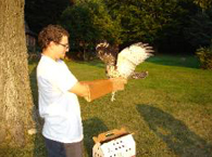 Volunteer Alexi Kimiatek getting ready to release a broad-winged hawk.